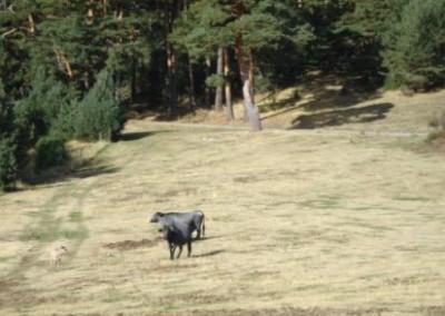 Pastos Valsaín 2012