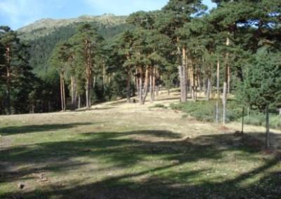 Anuncios pastos Valsaín 2011